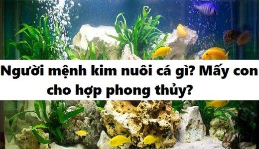 nguoi-menh-kim-nen-nuoi-ca-gi